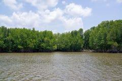 美洲红树森林和河在海旁边 免版税库存图片