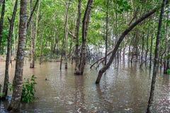 美洲红树森林和河 免版税库存照片