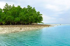 美洲红树森林在小海岛 免版税库存图片
