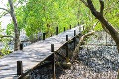 美洲红树森林步行 免版税库存图片