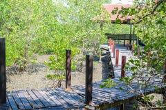 美洲红树森林步行 库存图片