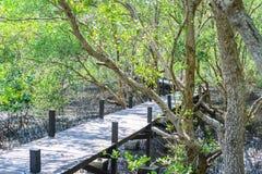 美洲红树森林步行 图库摄影
