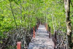 美洲红树森林步行 免版税图库摄影