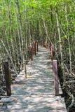 美洲红树森林步行 免版税库存照片