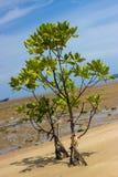 美洲红树森林 图库摄影