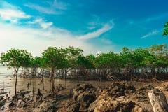 美洲红树森林 库存照片