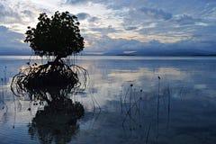 美洲红树植物在日落期间的海在海岛Pamilacan附近 库存照片
