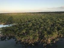 美洲红树沼泽全景  库存图片