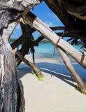美洲红树沼泽根的特写镜头 免版税库存照片