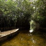 美洲红树沼泽 库存照片