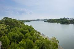 美洲红树生态系 库存照片