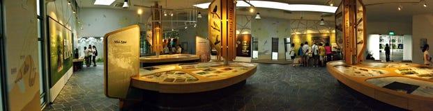 美洲红树画廊全景在Sungei Buloh沼泽地储备,新加坡的 免版税图库摄影