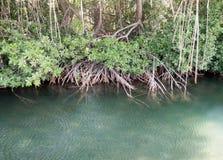 美洲红树-在Otrobanda附近的看法 库存图片