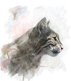美洲野猫的水彩图象 免版税图库摄影