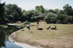 羚羊和起重机在室外封入物在布拉格动物园,捷克里 库存照片
