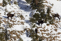 羚羊牧群 库存照片