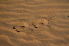 羚羊脚印 免版税库存照片
