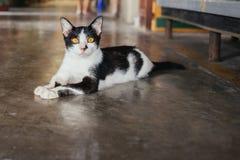 离群亚洲猫 库存照片