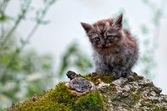 离群小猫 免版税库存照片