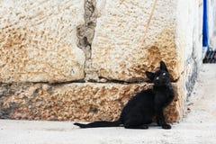 黑离群小猫 图库摄影
