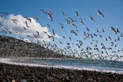 群海鸥 库存图片