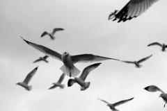 群海鸥 库存照片