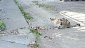 离群猫吃 股票视频