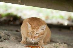 离群猫和食物 免版税库存图片