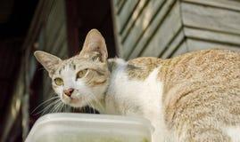 离群猫在被放弃的房子里 库存照片