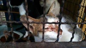 离群猫,可怜的猫 免版税库存照片