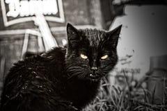 离群猫 免版税图库摄影
