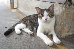 离群猫 免版税库存图片