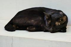 黑离群猫 免版税库存图片