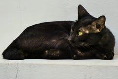 黑离群猫 库存照片