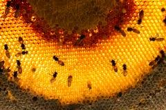 群集在蜂窝stilllife的蜂 免版税库存图片