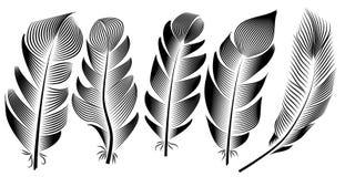 羽毛例证,图画,板刻,墨水,线艺术的汇集 库存例证