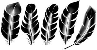 羽毛例证,图画,板刻,墨水,线艺术的汇集 向量例证
