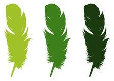 羽毛剪影-形成特别外面覆盖物的表皮成长或者全身羽毛,在鸟 库存例证