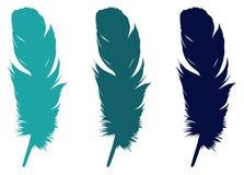 羽毛剪影-形成特别外面覆盖物的表皮成长或者全身羽毛,在鸟 向量例证