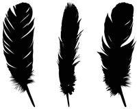 羽毛剪影-形成特别外面覆盖物的表皮成长或者全身羽毛,在鸟 皇族释放例证