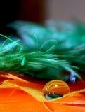 羽毛和小滴背景 图库摄影