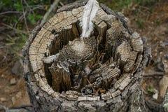 羽毛和树桩 图库摄影
