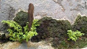 羽毛和植物老灰色挡水板的 免版税库存图片