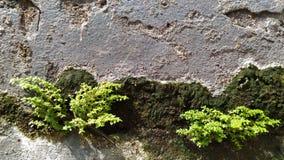 羽毛和植物老灰色挡水板的 免版税库存照片