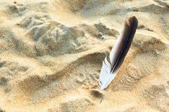 羽毛和沙子 免版税库存照片