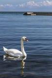 羽毛和水下落 免版税库存图片