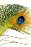 羽毛和水下落 免版税库存照片
