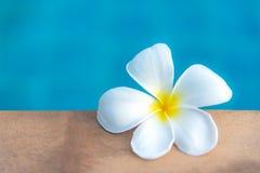 羽毛在游泳池附近开花温泉,放松和健康关心 库存照片