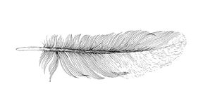 羽毛墨水剪影 背景查出的白色 免版税库存图片