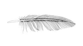 羽毛墨水剪影 背景查出的白色 免版税图库摄影